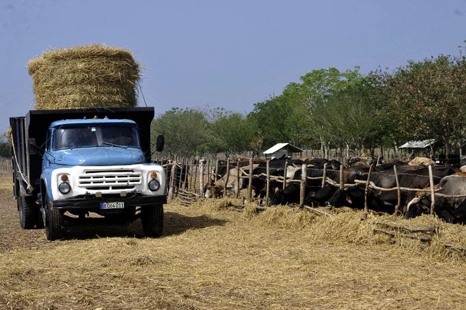 Desafíos para la ganadería en Granma