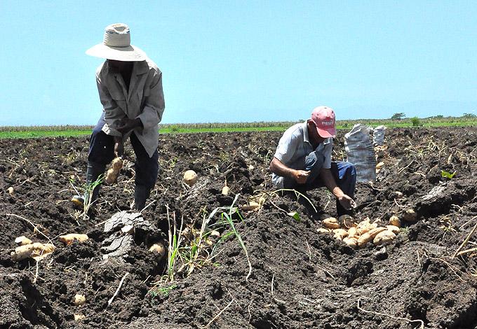 Producción agrícola, Granma