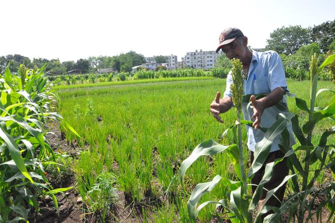 Granma calificó de Bien en la Agricultura Urbana y Suburbana