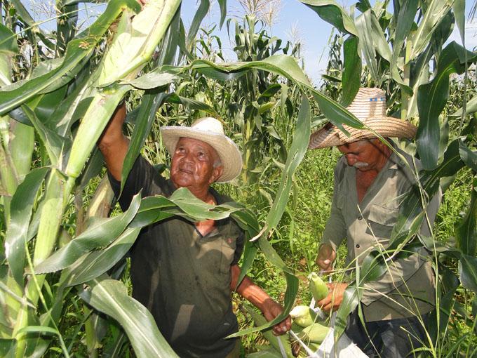 Campesinos, Granma