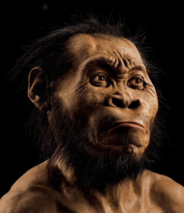 Descubren al Homo naledi, una especie humana desconocida hasta la fecha