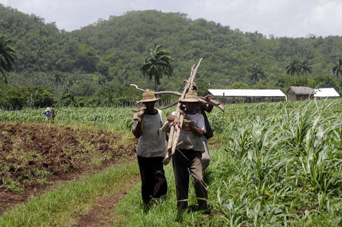 Instan a potenciar producciones agropecuarias en el Plan Turquino