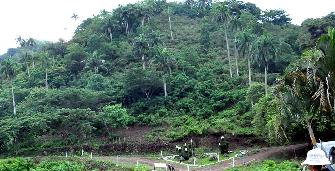 Creció área boscosa en Granma