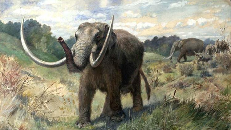 Extinción de mastodontes y megafauna
