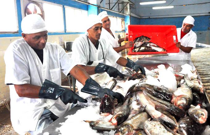 Industria pesquera, Granma
