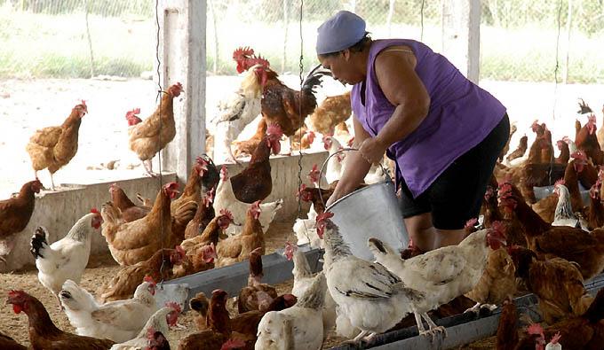 Rinden homenaje a mujer rural en Granma, Cuba