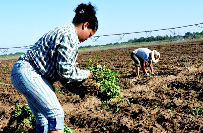 Crece  incorporación de la  mujer a producción de alimentos