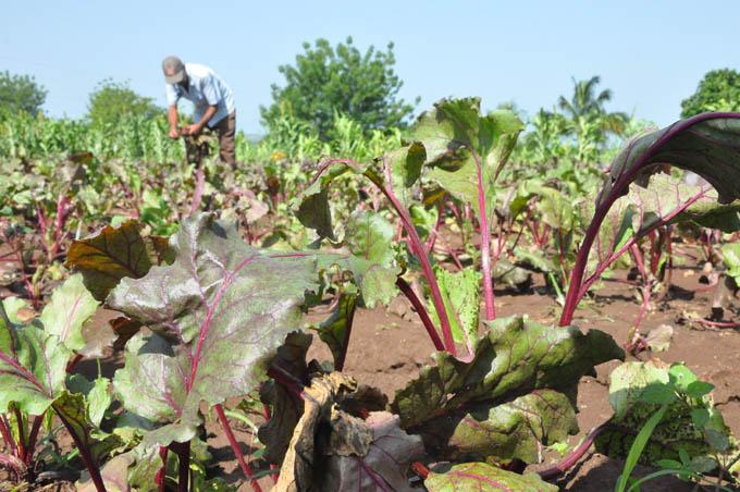 Instan a elevar la eficiencia en la Agricultura Urbana y Suburbana