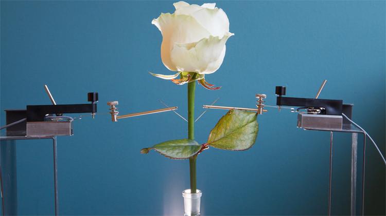 Flores electrónicas