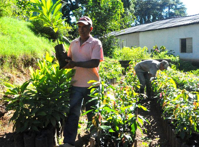 Estación experimental  Guisa:   Al servicio del desarrollo agroforestal