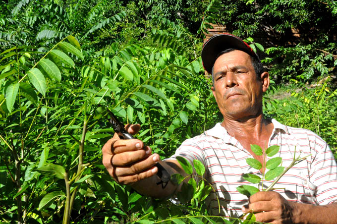 Sesionará jornada científica 45 aniversario Estación  agroforestal Guisa