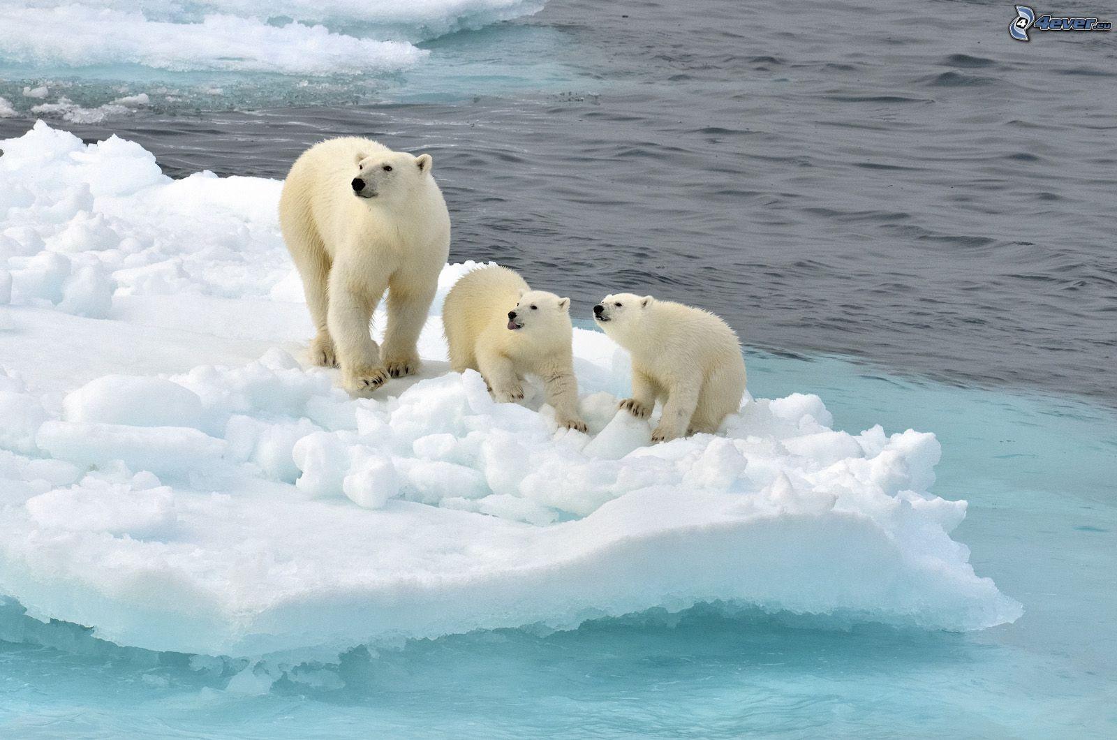 Para 2050 habrá menos hielo en el océano Ártico