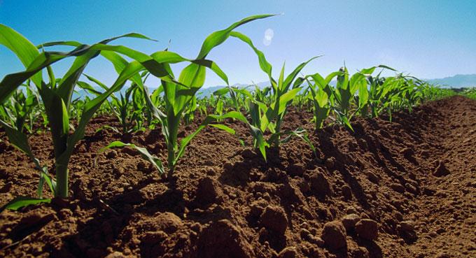 Agromás 2015: Fao aboga por una agricultura de conservación