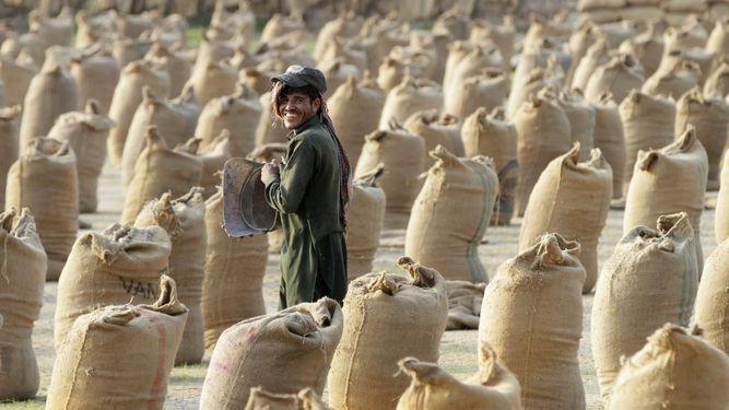 Producción arrocera en Pakistán