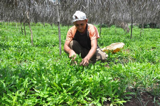 Aumentar producciones  y reducir precios en la Agricultura Urbana, Suburbana y Familiar