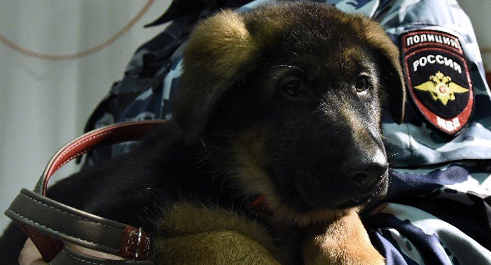 El perro policía ruso Dobrinia llega a Francia