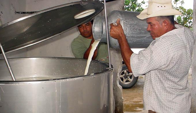 Granma inicia el 2016 cumpliendo plan de producción de leche vacuna