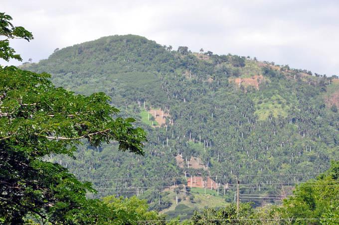 Destaca importancia del árbol y la  reforestación