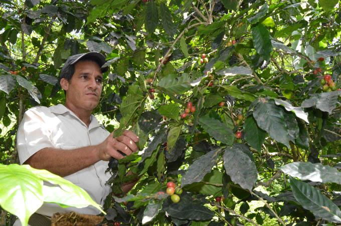 Empresa agroforestal de Buey Arriba la mejor de Granma