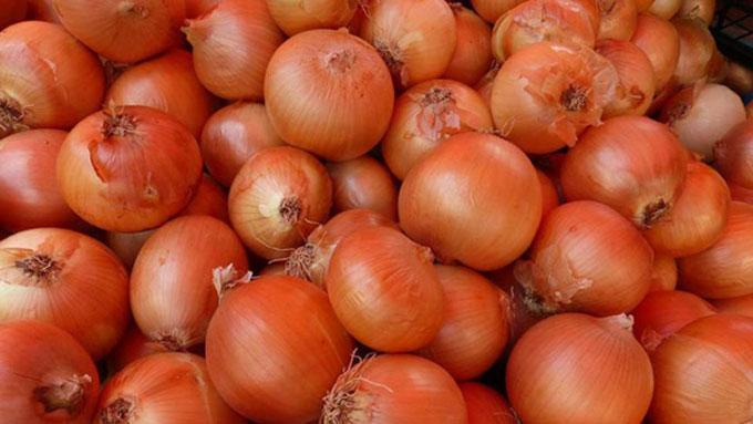 Tecnología de cantero favorece cultivares de cebolla en Granma