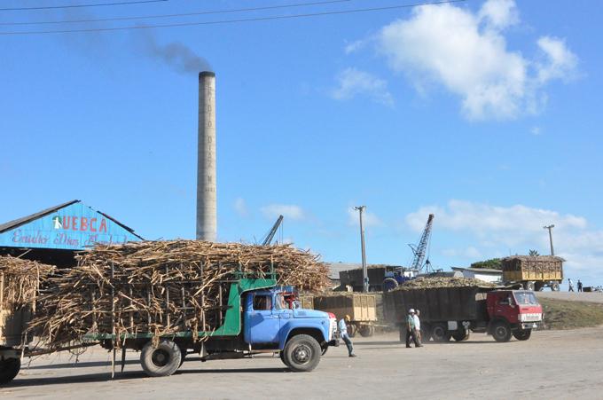 Producir azúcar  con eficiencia en Granma