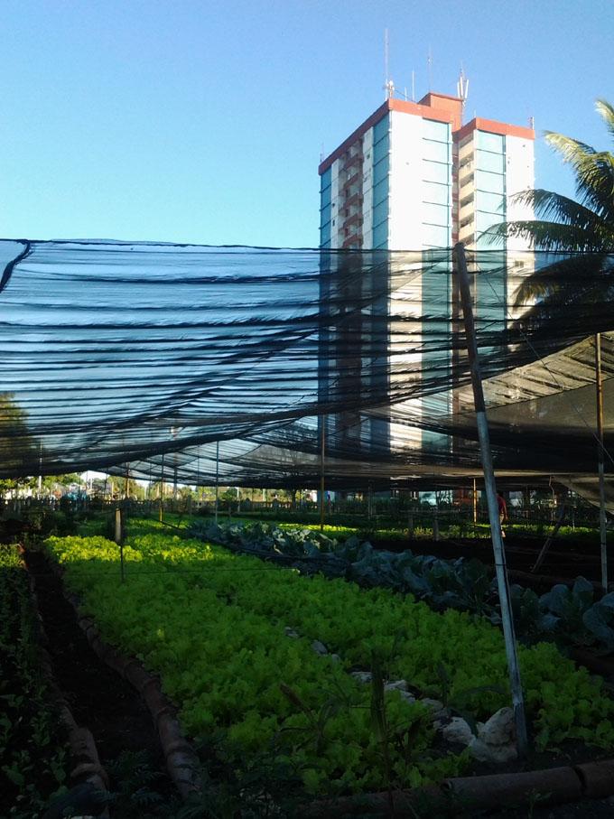 Busca la Agricultura Urbana y Suburbana  desarrollo local y reducción de precios