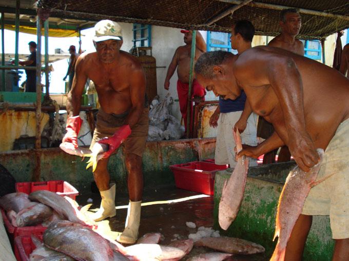 Pescadores manzanilleros sobrecumplen planes de captura