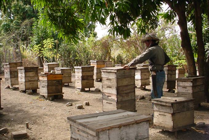 Granma excedió producciones apícolas en enero