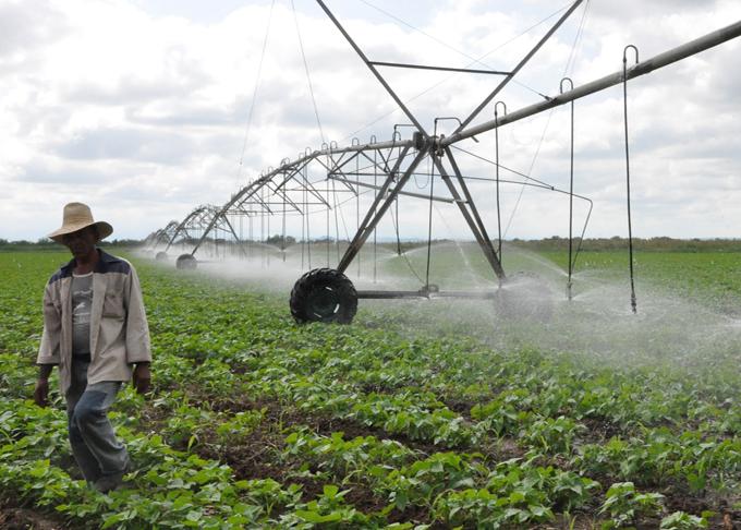 Aceleran  siembras de cultivos varios en  áreas  bajo riego en Granma