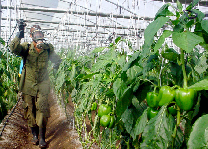 Cuba organizará encuentro internacional de agricultura sostenible