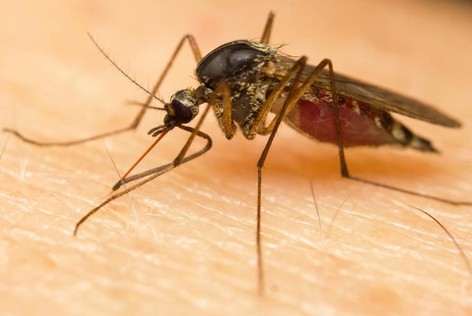 Autoridades sanitarias de Centroamérica aprueban lucha regional contra el zika
