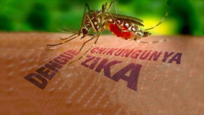 Llaman a gobierno colombiano a desarrollar prevención contra el Zika