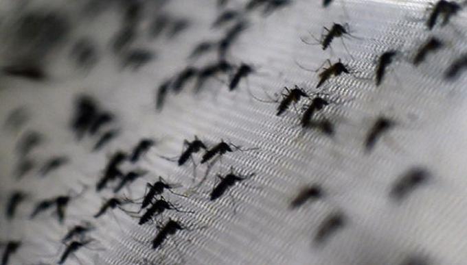 Brasil esterilizará a mosquitos con rayos gamma en su guerra contra el zika