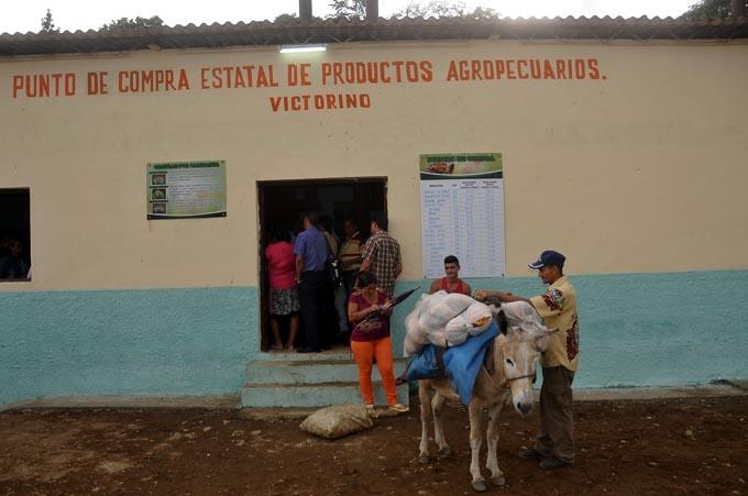 Inicia experiencia en comercialización de productos agropecuarios en Granma