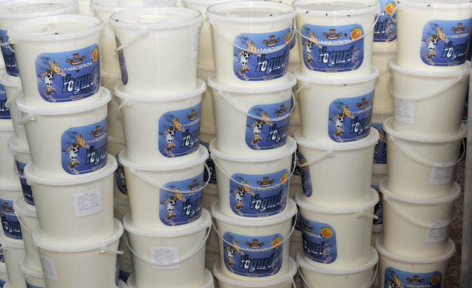 Producirá Lácteos Manzanillo yogurt natural para mercado en divisa