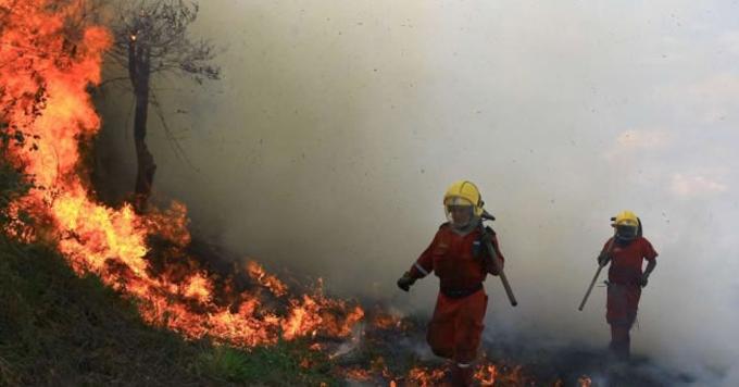 Oleada de incendios forestales amenaza biodiversidad en Colombia