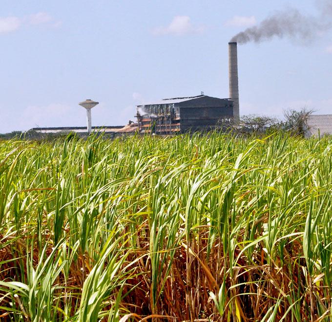 No renuncian al plan de azúcar en Grito de Yara