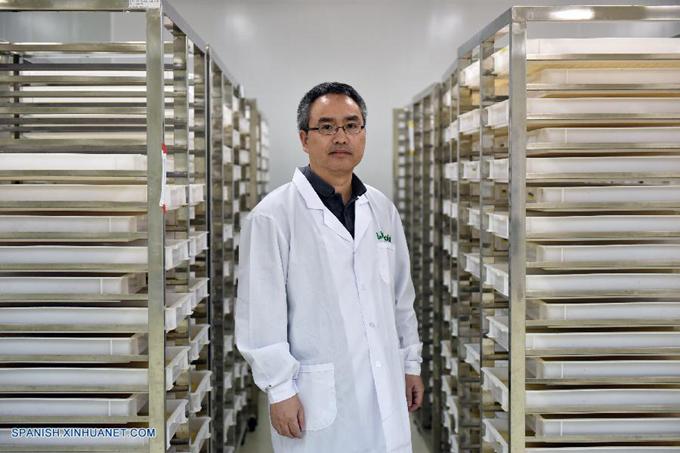 Laboratorio chino esteriliza mosquitos para combatir dengue y virus del Zika