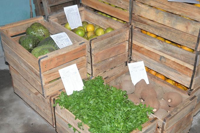 Generalizan experiencia en comercialización de productos agropecuarios en Granma