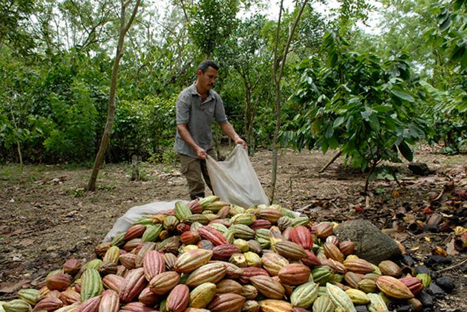 Desarrollan Cuba y Bélgica proyectos agroecológicos