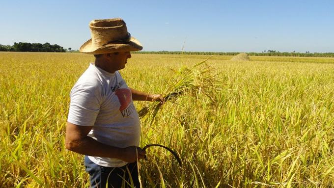 Promueve Cuba en Vietnam oferta de negocios en sector agropecuario