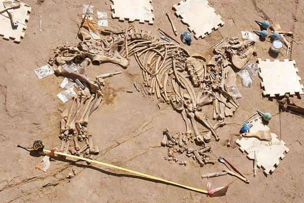 Hallan en España los restos fósiles completos de un tapir de 3 millones de años (Fotos)