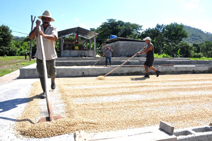 Intensifican preparativos para cosecha cafetalera 2016-2017