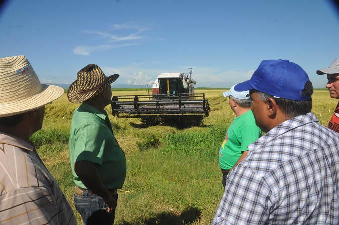 Granma trabaja por eficiencia agroindustrial en el arroz
