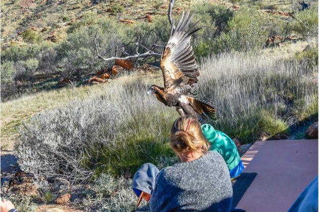 Un águila trata de llevarse a un niño en un parque de Australia