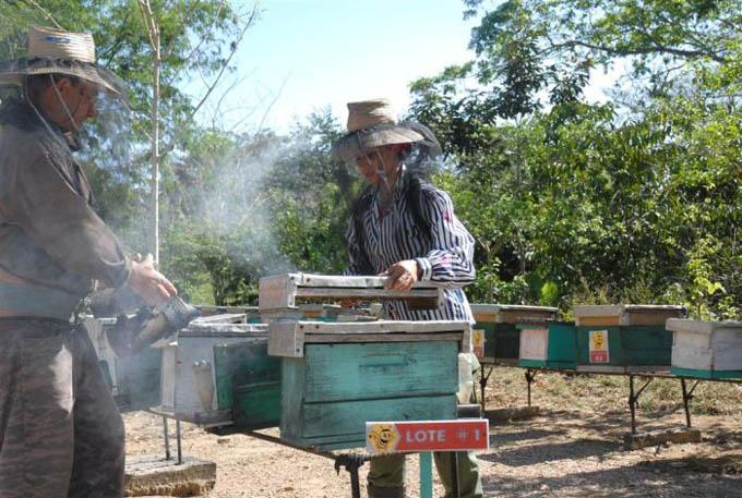 Apicultura cubana es un ejemplo para el mundo, según empreario