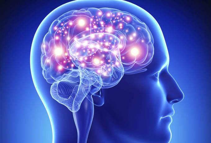 Elaboran nuevo mapa del cerebro humano