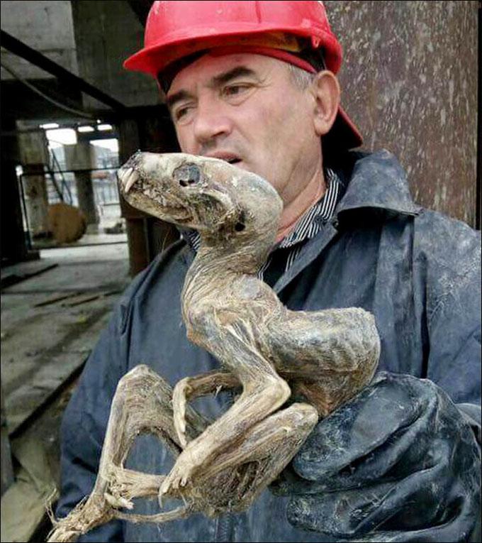¿Bestia prehistórica o especie desconocida? Hallan un extraño ser momificado en una mina siberiana
