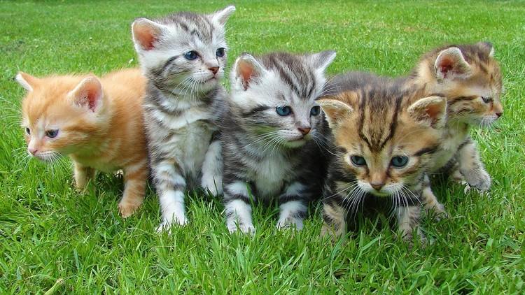 ¿La diferencia entre un gato y una gata?: Científicos alemanes realizan un asombroso descubrimiento