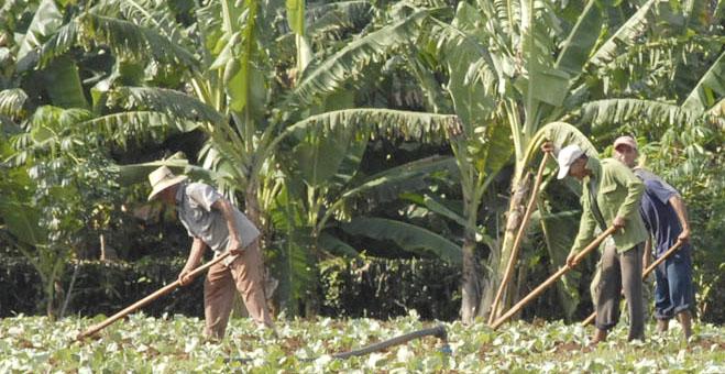Agricultura Granma
